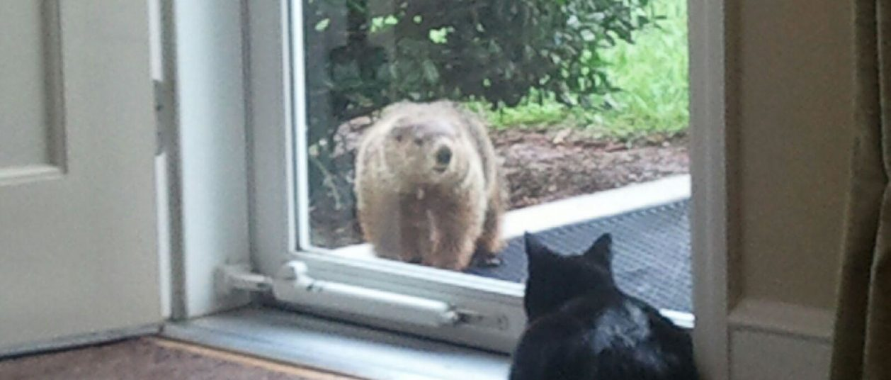 cat-and-groundhog