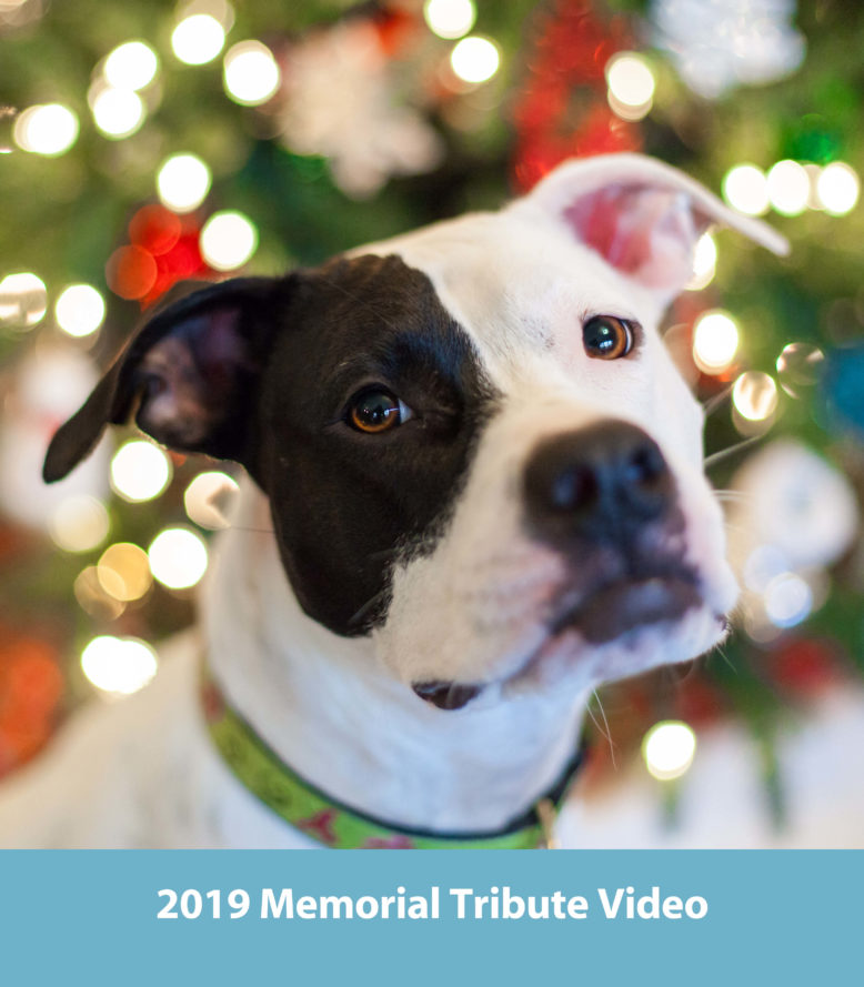 <a href=https://www.tributeslides.com/tributes/show/DKJWTKKY5SK7XF67/>IN LOVING MEMORY | Click to view this year's Pet Memorial Video</a>